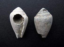 Sezione Paleontologica